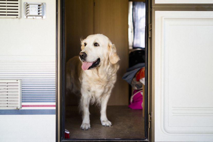 caravan dog